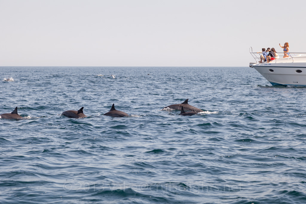 dolphin_watching_001_20130305-img_3215