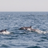 dolphin_watching_002_20130305-img_3219