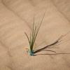 dune_bashing_003_20130302-img_2653