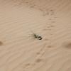 dune_bashing_018_20130302-img_2774