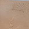 dune_bashing_019_20130302-img_2777