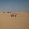 dune_bashing_020_20130302-img_2810