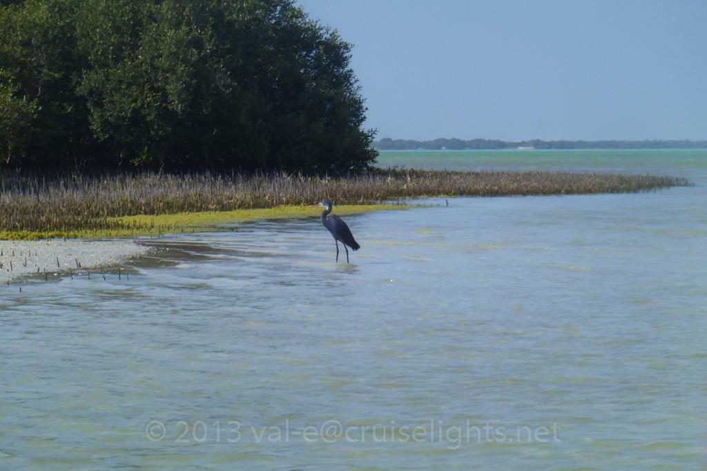 mangroventour_008_20130307-p1020151