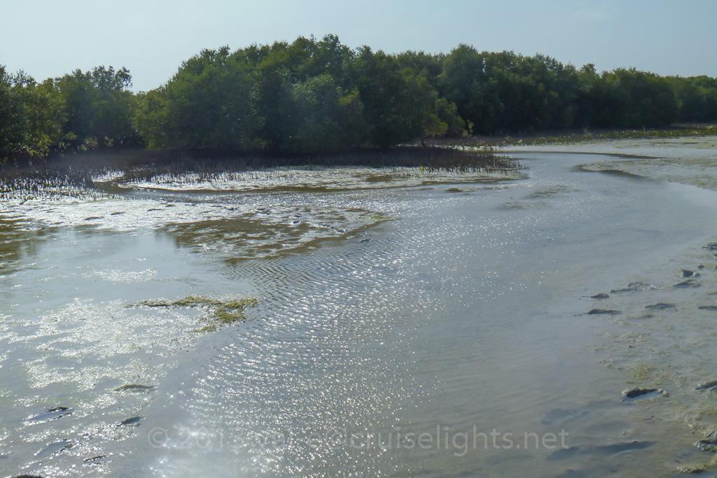 mangroventour_012_20130307-p1020167
