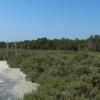 mangroventour_003_20130307-p1020135