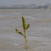 mangroventour_013_20130307-p1020175